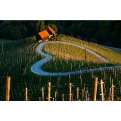 Veinid? Sloveenia veinid? Kas Sloveenias tehakse veini? Kui naljakas, Sloveenia veinid…